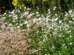 Vicarage flowers 1