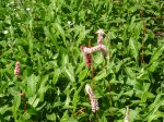 Vicarage flowers 2