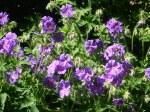 Vicarage flowers 3