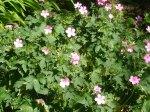 Vicarage flowers 4
