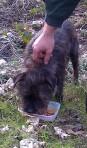 Scampy dog
