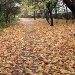 Golden route