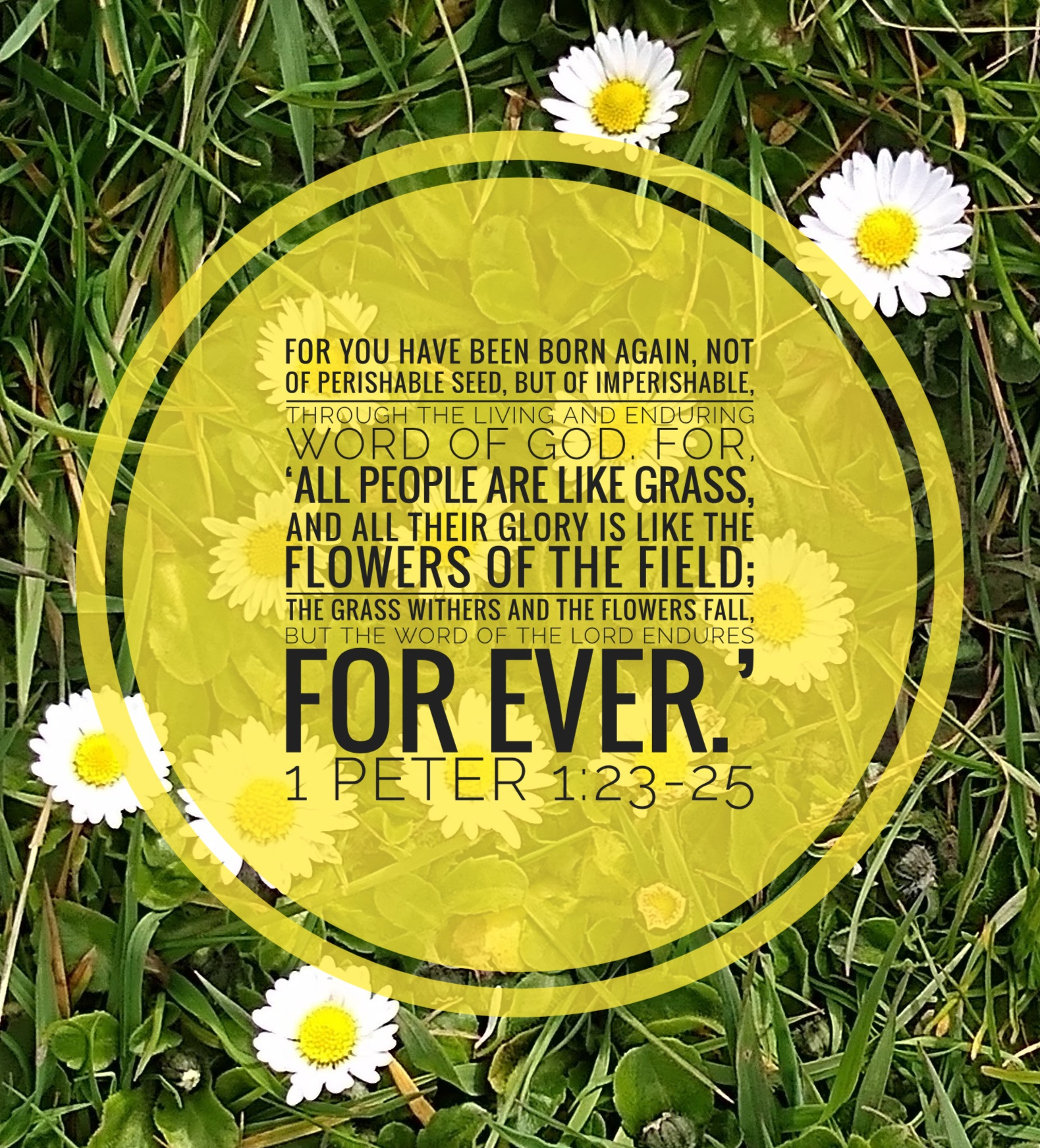 [Text on yellow disc over picture of white/yellow daisies on green grass] For you have been born again, not of perishable seed, but of imperishable, through the living and enduring word of God. For, 'All people are like grass, and all their glory is like the flowers of the field; the grass withers and the flowers fall, but the word of the Lord endures for ever.'