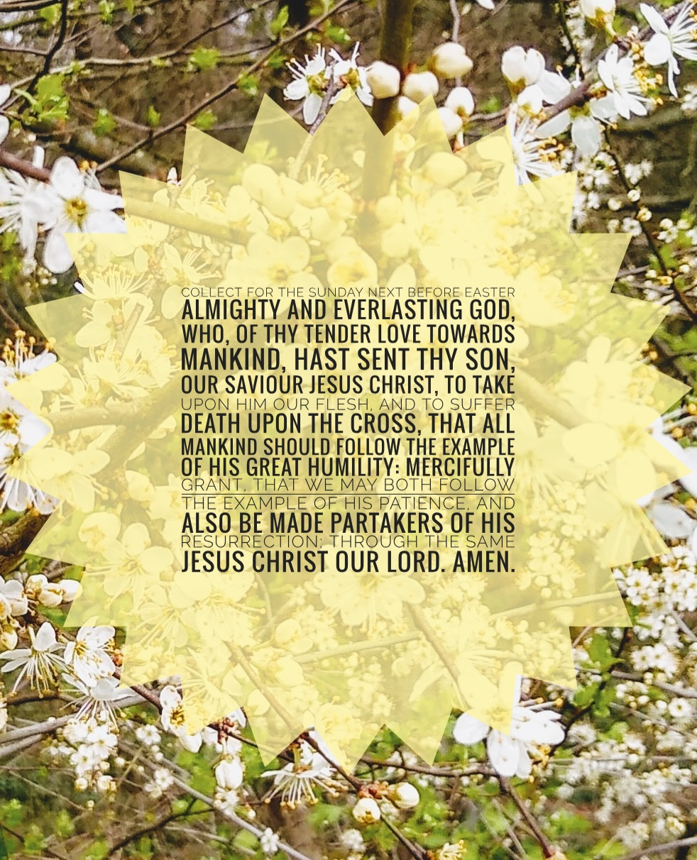 [Black text on yellow starburst, photo of blackthorn blossom behind] ALMIGHTY and everlasting God, who, of thy tender love towards mankind, hast sent thy Son, our Saviour Jesus Christ, to take upon him our flesh, and to suffer death upon the cross, that all mankind should follow the example of his great humility: Mercifully grant, that we may both follow the example of his patience, and also be made partakers of his resurrection; through the same Jesus Christ our Lord. Amen.